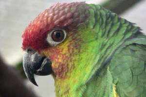 Ecuador-Amazone