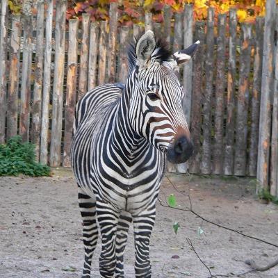 Zoo-Safari für Ferienkinder, 10. Oktober, 14 Uhr