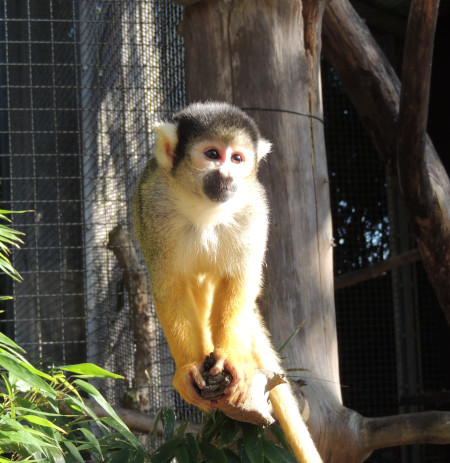 Zoo geschlossen / Veranstaltungen bis 19. April abgesagt