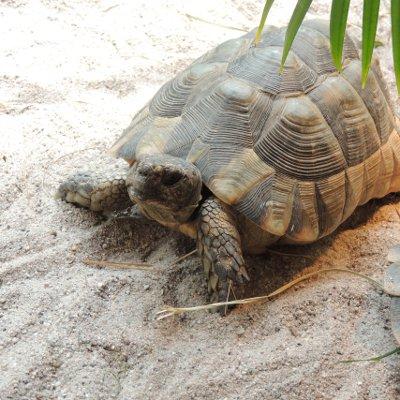 DGHT-Schildkrötenstammtisch am 30. September, 19.30 Uhr