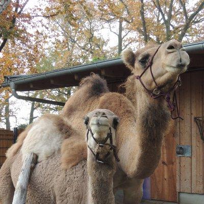 Kinderbetreuung in der Zooschule an Brückentagen und in den Ferien