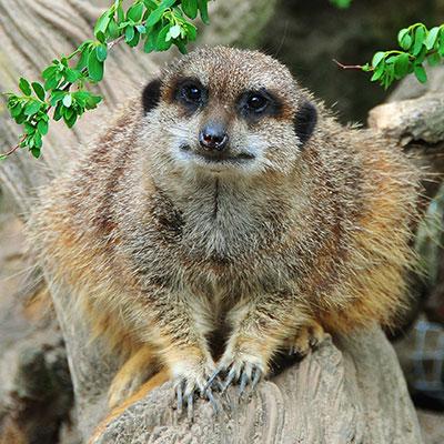 Zoo bis voraussichtlich 14. Februar 2021 geschlossen