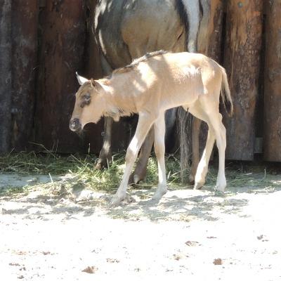 Ein Hauch von Serengeti im Zoo Landau