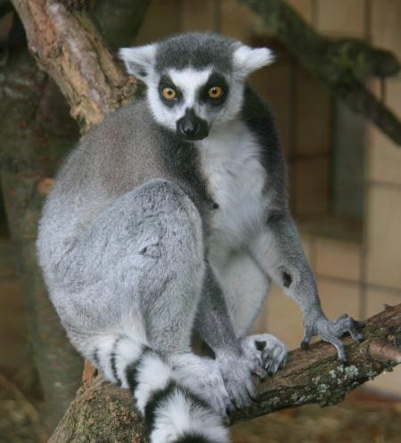 Zooführung speziell für Senioren, Sonntag, 22. September, 14 Uhr