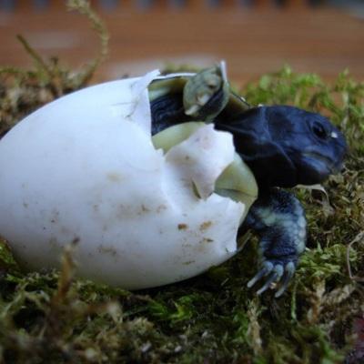 DGHT-Schildkrötenstammtisch am 28. Juni