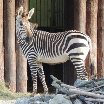 Erlebnis-Abenteuer-Camp im Zoo, 31.8.-1.9.