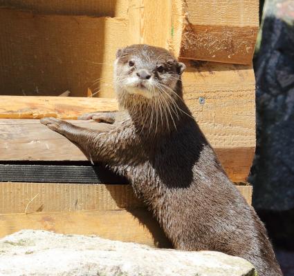 """""""Otternasen, frische Otternasen"""" … jetzt auch im Zoo Landau in der Pfalz"""