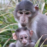 """""""Von Madagaskar bis Brasilien – Primaten im Zoo Landau"""" – Öffentliche Zooführung mit Zoodirektor Dr. Jens-Ove Heckel, 21.10., 11 Uhr"""